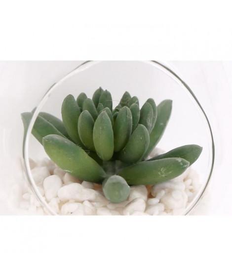 Pendaison succulente - 14 x 10 cm