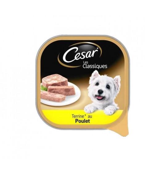 CESAR Barquette en terrine au poulet - Pour chien adulte - 300 g (x20)