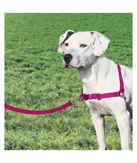 EASY WALK Harnais M - Framboise - Pour chien
