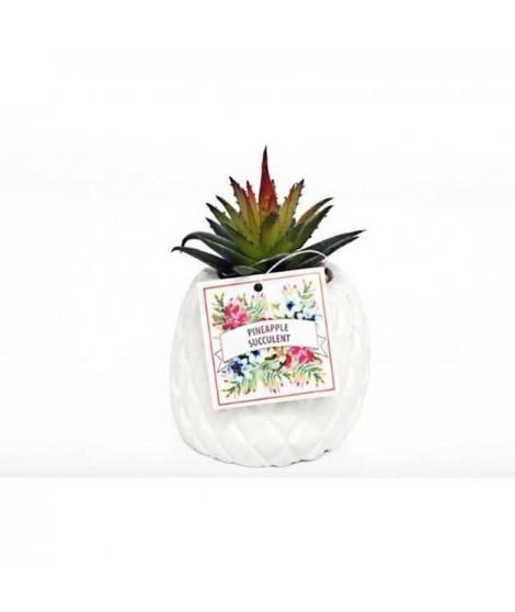 Ananas succulent - 8,5 x 12 cm